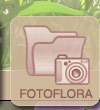 Galeria zdjec, foto, zdjecia, fotoflora